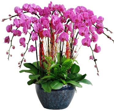 9 dallı mor orkide  Tunceli internetten çiçek satışı