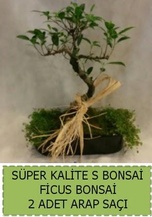 Ficus S Bonsai ve arap saçı  Tunceli güvenli kaliteli hızlı çiçek
