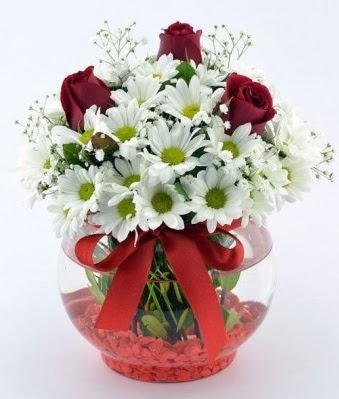 Fanusta 3 Gül ve Papatya  Tunceli çiçek gönderme