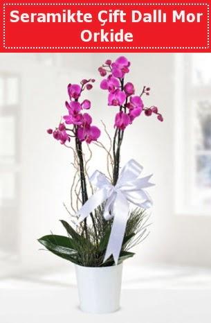 Seramikte Çift Dallı Mor Orkide  Tunceli çiçekçiler