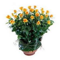 Tunceli çiçekçi mağazası  10 adet sari gül tanzim cam yada mika vazoda çiçek