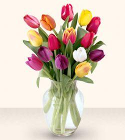 Tunceli çiçekçi telefonları  13 adet cam yada mika vazoda laleler