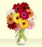 Tunceli hediye sevgilime hediye çiçek  cam yada mika vazoda 15 özel gerbera