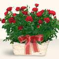 Tunceli çiçek online çiçek siparişi  11 adet kirmizi gül sepette