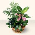 Tunceli yurtiçi ve yurtdışı çiçek siparişi  5 adet canli çiçek sepette