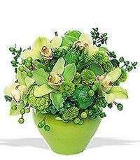 cam yada mika vazoda 5 adet orkide   Tunceli anneler günü çiçek yolla
