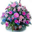 karisik mevsim kir çiçekleri  Tunceli çiçek servisi , çiçekçi adresleri
