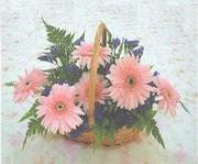 gerbera çiçeklerinde sepet   Tunceli çiçek mağazası , çiçekçi adresleri