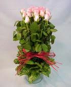 13 adet pembe gül silindirde   Tunceli çiçek mağazası , çiçekçi adresleri