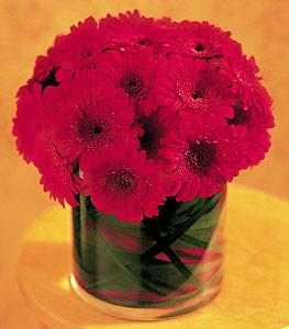 Tunceli çiçek yolla , çiçek gönder , çiçekçi   23 adet gerbera çiçegi sade ve sik cam içerisinde