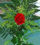1 adet kirmizi gül buketi   Tunceli çiçek , çiçekçi , çiçekçilik