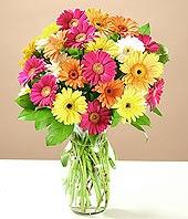 Tunceli çiçek siparişi vermek  17 adet karisik gerbera