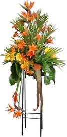 Tunceli çiçek yolla  perförje tanzimi dügün nikah ve açilislara