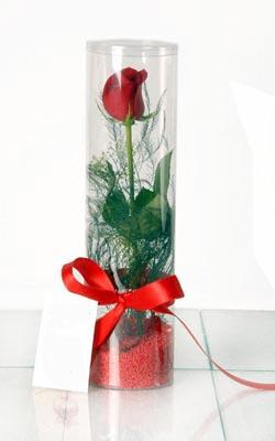 Tunceli çiçek mağazası , çiçekçi adresleri  Silindir vazoda tek kirmizi gül