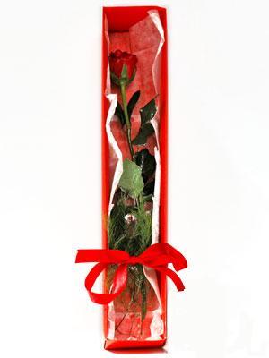 Tunceli 14 şubat sevgililer günü çiçek  1 adet kutuda gül
