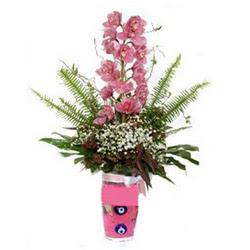 Tunceli İnternetten çiçek siparişi  cam yada mika vazo içerisinde tek dal orkide çiçegi