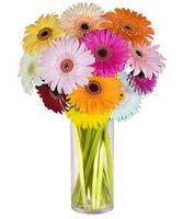 Tunceli çiçek satışı  Farkli renklerde 15 adet gerbera çiçegi