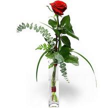 Tunceli internetten çiçek satışı  Sana deger veriyorum bir adet gül cam yada mika vazoda