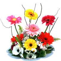 Tunceli İnternetten çiçek siparişi  camda gerbera ve mis kokulu kir çiçekleri