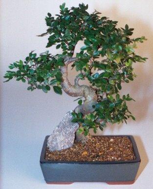Tunceli çiçek servisi , çiçekçi adresleri  ithal bonsai saksi çiçegi  Tunceli çiçek yolla