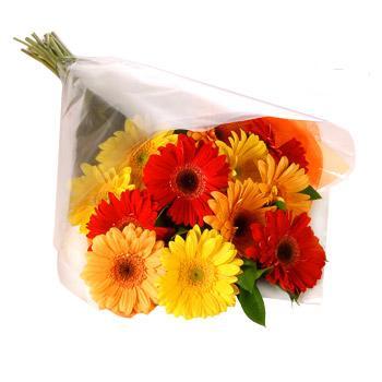 Karisik renklerde gerbera buketi  Tunceli çiçekçi mağazası