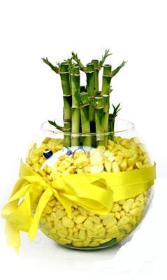 cam fanus içerisinde bambo  Tunceli çiçek gönderme