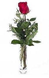 Vazo içerisinde 1 adet kirmizi gül  Tunceli çiçekçi mağazası