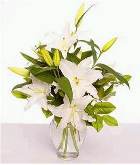 Tunceli kaliteli taze ve ucuz çiçekler  2 dal cazablanca vazo çiçeği