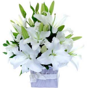Tunceli çiçek mağazası , çiçekçi adresleri  2 dal cazablanca vazo çiçeği