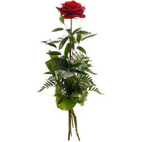 Tunceli anneler günü çiçek yolla  1 adet kırmızı gülden buket
