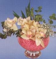Tunceli cicek , cicekci  Dal orkide kalite bir hediye