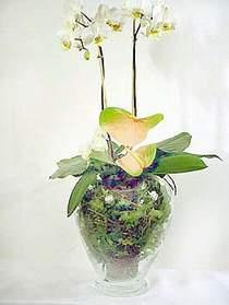 Tunceli yurtiçi ve yurtdışı çiçek siparişi  Cam yada mika vazoda özel orkideler