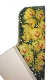 Tunceli kaliteli taze ve ucuz çiçekler  Kutu içerisine dal cymbidium orkide