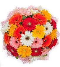 15 adet renkli gerbera buketi  Tunceli 14 şubat sevgililer günü çiçek