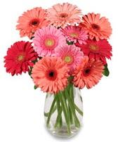 vazo içerisinde 13 adet gerbera çiçeği  Tunceli çiçek yolla