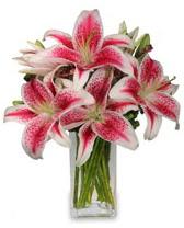 Vazo içerisinde 5 dal kazablanka çiçeği  Tunceli çiçekçi mağazası