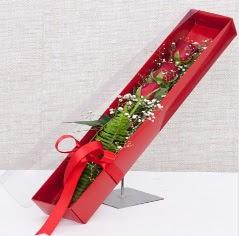 Kutu içerisinde 3 adet kırmızı gül  Tunceli ucuz çiçek gönder