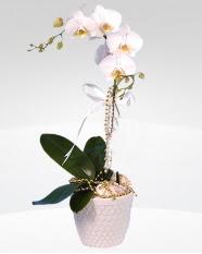 1 dallı orkide saksı çiçeği  Tunceli anneler günü çiçek yolla