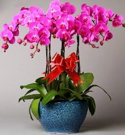 7 dallı mor orkide  Tunceli çiçek siparişi vermek
