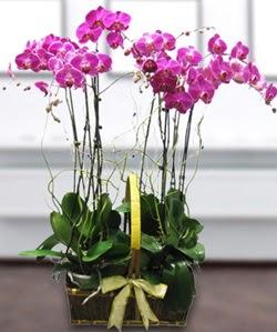 4 dallı mor orkide  Tunceli uluslararası çiçek gönderme