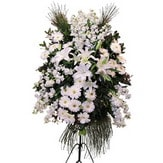 Tunceli hediye çiçek yolla  Ferforje beyaz renkli kazablanka
