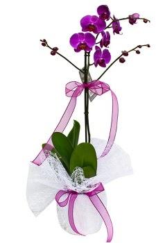 Tek dallı mor orkide  Tunceli güvenli kaliteli hızlı çiçek