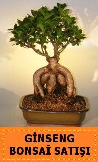 Ginseng bonsai satışı japon ağacı  Tunceli hediye çiçek yolla