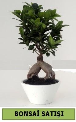 Bonsai japon ağacı satışı  Tunceli online çiçek gönderme sipariş