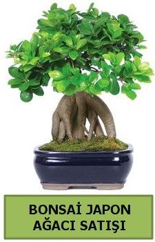 Bonsai japon ağacı satışı  Tunceli yurtiçi ve yurtdışı çiçek siparişi