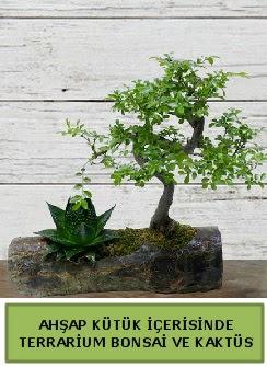 Ahşap kütük bonsai kaktüs teraryum  Tunceli çiçek satışı