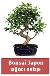 Japon ağacı bonsai satışı  Tunceli çiçek yolla
