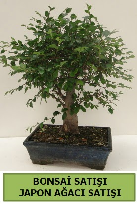 Minyatür bonsai japon ağacı satışı  Tunceli çiçek servisi , çiçekçi adresleri