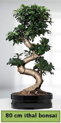 80 cm özel saksıda bonsai bitkisi  Tunceli güvenli kaliteli hızlı çiçek