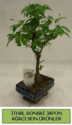 İthal bonsai japon ağacı bitkisi  Tunceli internetten çiçek siparişi